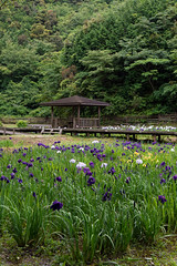 -564 (Mio:D) Tags: iris flower   ise