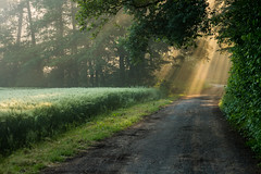 Weg durchs Licht (webpinsel) Tags: felder frühling halternamsee landschaft morgendämmerung morgensonne natur nebel sonnenaufgang sythen morgens