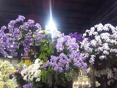 IMG_20160321_111435 (Sasha India) Tags: flowers orchid thailand orchids bangkok exibition apoc   apoc12