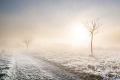 Two (Kevin Rodde Photography) Tags: sunrise sun fog frost frozen trees november grass eastbranchforestpreserve fpddc forestpreservedistrictofdupagecounty trail dupagecounty canon 6d