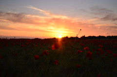 Red sunset (dreamearth 85) Tags: sunset red france field de rouge soleil spring nikon champs poppy printemps coquelicot couch vende paysdelaloire d7000 saintdenislachevasse vieetboulogne