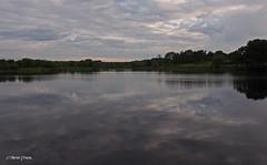 Longmoor Pool M6251160sm (Preselector) Tags: suttoncoldfield suttonpark bioblitz