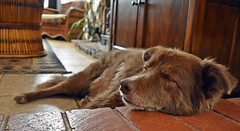 Let Sleeping Dogs Lie! (Jo-I Have A New Group!) Tags: ddc odc idiom 1691 youknowwhattheysay