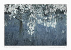 In the Midnight Garden (www.damientaylor.co.uk) Tags: blue painterly tree me grass japan dark cherry photography japanese blossom branches fineart multipleexposure midnight icm intentionalcameramovement