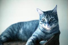 film (La fille renne) Tags: film animal analog cat 35mm lomography turquoise canonae1program 50mmf18 lomochrome lafillerenne lomochrometurquoise lomochrometurquoisexr100400
