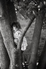 Tree Climber (Shannon Alexander Photography) Tags: blackandwhite bw tree child fineartphotography treeclimbing fineartphotographer freelensing vermontphotographer freelensed