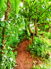 Poet's Walk, Clevedon, Somerset (photphobia) Tags: uk trees england green stairs forest fence woods outdoor path somerset posts clevedon coastalpath clevedonpier poetswalk southwestengland oldwivestale westengland