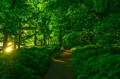 Sunrise; a walk in the woods (tomk630) Tags: light green nature sunrise virginia path walk potomac banks