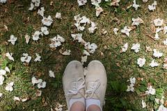 Fallen but not Forgotten Pt. II (Miss Marisa Renee) Tags: flowers original flower feet me nature floral grass digital canon spring shoes fallen mywork catalpa keds grassy neutral 2016 catalpatree canon5dmarkii marisarenee june2016