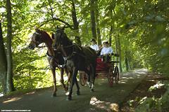 PFERDEKUTSCHENFAHRT (PADDYSCHMITT.DE) Tags: allee pferdekutsche kutschenfahrt immenried langwuhrweiher