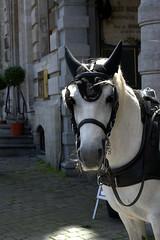 Brussels (PurePhotography~Thiagu S) Tags: grotemarkt grandplace horse portrait
