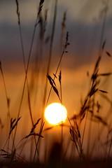Kfer-Perspektive (Don Bello Photography) Tags: europa europe sonnenuntergang sommer wiese himmel sonne abendhimmel perspektive 1000views abendsonne mecklenburgvorpommern grser neubrandenburg abendstimmung norddeutschland 2016 abendlicht northerngermany tollensesee sonnenlicht 2000views acdsee abendruhe 100favorites 50favorites abendstille abendleuchten kleinnemerow himmelsfeuer himmelsbilder 150favorites lumixphotographer donbello panasonicphotographer reinhardbellmann panasonicfz1000 lumixfz1000 donbellophotography acdseeultimate9 himmelsgold