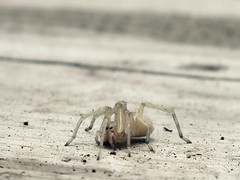 (.sarah444.) Tags: bug insect spider