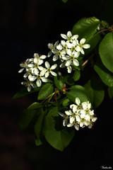 Signs of spring. (Timbuckto.) Tags: signs spring mygearandme blinkagain bestevergoldenartists flowerthequietbeauty