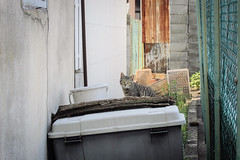 Today's Cat@2013-05-12 (masatsu) Tags: cat canon catspotting thebiggestgroupwithonlycats powershots95