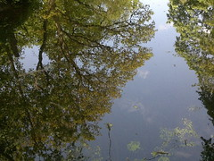 Reflected (Gazzmann80) Tags: trees sky reflection nature water pond