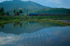 Train in the rice field (MIYAMOTO824) Tags: sunset reflection japan train niigata ricefield 2013