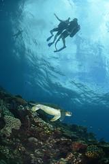 2013 04 METTRA OCEAN INDIEN 1807