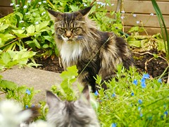 That's MY spot! (AxsMan) Tags: cat moments favourite catmoments lumixgvario45200f4056