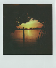 Sunrise through the mangroves (Jacob's Camera Closet) Tags: camera sun color film sunrise project polaroid 600 instant mangroves protection impossible