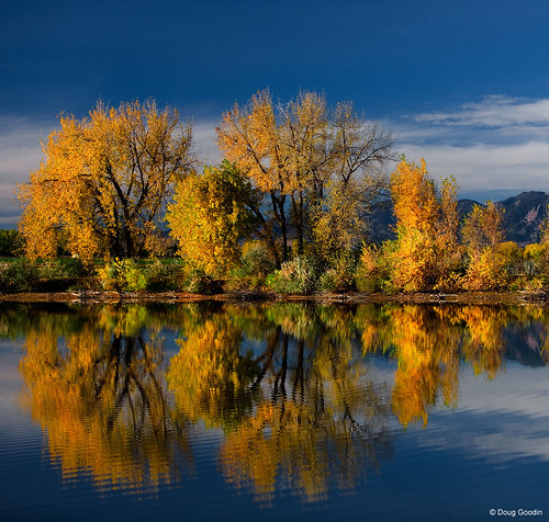 Photo - Cottonwoods reflected in Teller Lake.