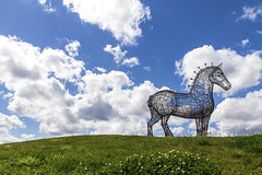 Heavy Horse... Standing proud in the sun. (Neo7Geo) Tags: canon scotland m8 andyscott heavyhorse 60d canon60d