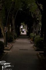 Walk (stefano_serra) Tags: city trees tree dark photography for back tunnel follow sidewalk instant unreal avenue l4l folllow stefanoserra like4like