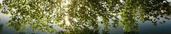 morninglight (stega60) Tags: morning trees naturaleza sun nature water landscape schweiz switzerland see countryside scenery wasser natur paisaje scene paysage landschaft sonne bltter bume zrichsee regin morgenlicht stega60