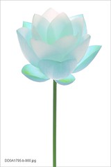 Flower (Bahman Farzad) Tags: flower waterlily