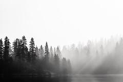 some whispers around the trees (Super G) Tags: california trees sky blackandwhite bw lake mountains fire dawn smoke rim gerlecreek eldoradonationalforest thisforestisnowclosedduetothefactthatourdumberthanarocklegislatorscantstopactinglike3yearoldsinasandbox weneedtostagearevoltequalinmagnitudetothebostonteaparty letsmakethemsorrytheyeventhroughtaboutit