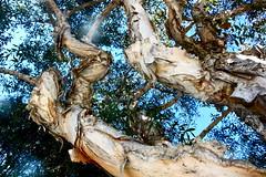 IMG_4013 (cadbury_63) Tags: california discoverla