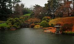 Rainy Koi Pond (HorsePunchKid) Tags: gothamist brooklynbotanicgarden japanesehillandpondgarden seenongothamist bbgcalnovember bbgcalstructures bbgcalfall bbgselection bbg2017october