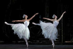 Your Reaction: Swan Lake 2015