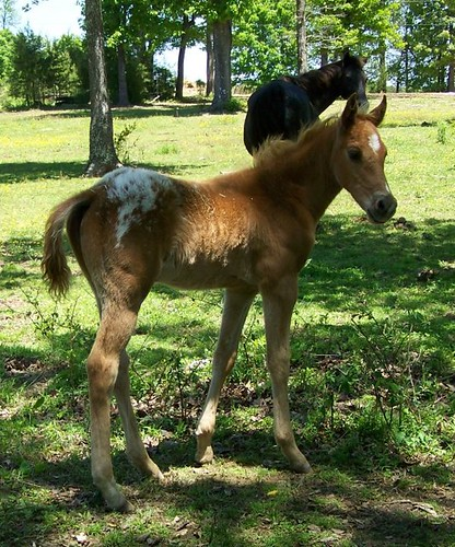 Flashy Colt With Excellent Bloodlines