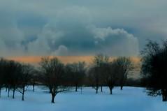 After The Love Has Gone (floralgal) Tags: trees sunset snow nature dusk drama dramaticsky winterlandscape ryenewyork ryenewyorkgolfcourse