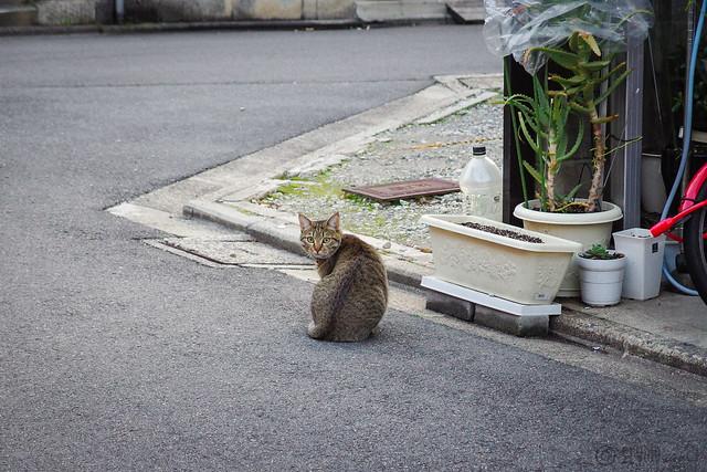 Today's Cat@2014-02-20