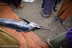 709-Mya-SITTWE-233.jpg (stefan m. prager) Tags: southeastasia burma myanmar markt birma fischmarkt handel sittwe sudostasien