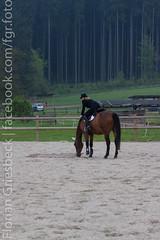 IMG_1613 (florian_1_1_2) Tags: horse funday pferde pferd reiten dressur alzinger gelassenheit reitanlage gemling reitanlagealzinger