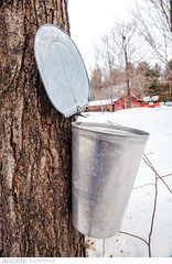 Maple Sap Bucket (Vincent Demers - vincentphoto.com) Tags: winter food snow ontario canada cold tree industry nature metal forest season outdoors bucket spring maple woods aluminum quebec sweet farm drop sugar container hut treetrunk environment syrup shack mapletree organic tradition agriculture process sap sugarbush sucre redmaple traditionalculture harvesting maplesugaring sugarshack maplesugar maplegrove maplesap mapleflavor sweetfood sapbucket canadiantradition quebectradition canadianculture makingmaplesyrup maplesapbucket sapcollection tappingmapletree maplesyrupprocess syropdtable quebecculture