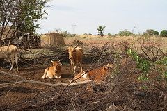 tanzania stora 1827