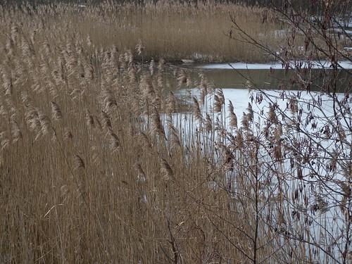 20150219_65_Wienerwaldsee (Large)