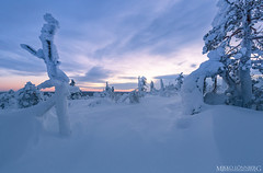 Finnish Lapland beauty (Mikko Lnnberg) Tags: winter sunset cloud cold color nature canon suomi finland landscape landscapes scenery north explore lapland wonderland fell kslompolo kuertunturi mikkolnnbergphotography
