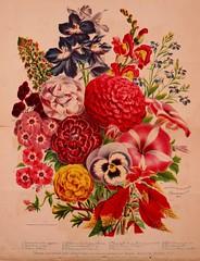 n13_w1150 (BioDivLibrary) Tags: flowers gardening seeds catalogs plantsornamental peterhendersonco usdepartmentofagriculturenationalagriculturallibrary bhlgardenstories bhlinbloom bhl:page=42671203 dc:identifier=httpbiodiversitylibraryorgpage42671203
