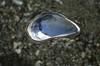 Sørlandet661 (Chromatic Dreams) Tags: shell skjell