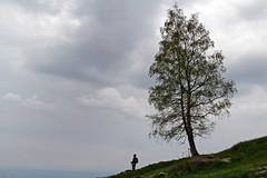 Biellese - Muanda, proporzioni.. (mariagraziaschiapparelli) Tags: primavera piemonte montagna escursionismo camminata betulle biellese muanda allegrisinasceosidiventa