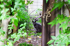 Today's Cat@2016-05-23 (masatsu) Tags: cat pentax catspotting mx1 thebiggestgroupwithonlycats