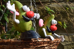 Pair of Pears Peering (StevenParsons42) Tags: fruit garden toys funny flickr basket outdoor potato heads pairs friday flikr pairing