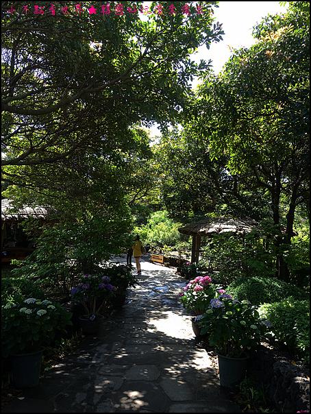 濟州山茶花庭院 (8).JPG