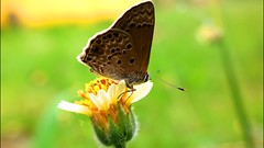 Butterfly (SaintClair) Tags: macro macrophotograph lumia1020