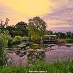 Malerischer Sonnenuntergang ... mehr auf www.fobo.at (fobo.at) Tags: square sonnenuntergang squareformat teich sonnig landschaft iphoneography malerische darktable instagramapp uploaded:by=instagram